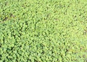 P�t pravidel pro pr�ci se zelen�m hnojen�m