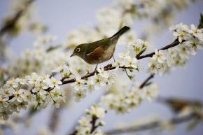 Udělejte si náskok na jaro – zasejte už teď!