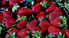 Je čas popřemýšlet o nových jahodnících!